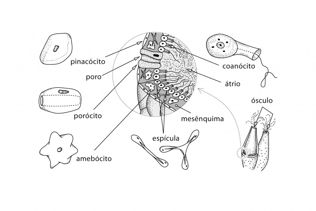 Illustration Biologie