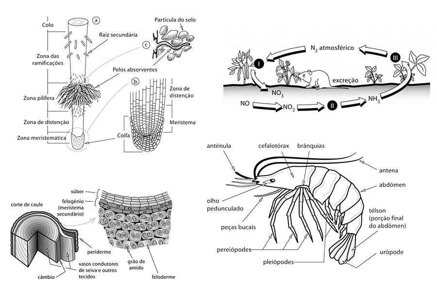 Markus Steiger Illustration Biology