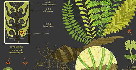 Screenshot Site Infographic of Plants